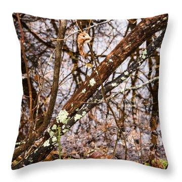 Wet Wintery Woods Throw Pillow