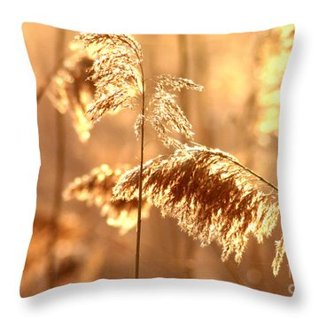 Wetland Sunrise Throw Pillow by Kenny Glotfelty