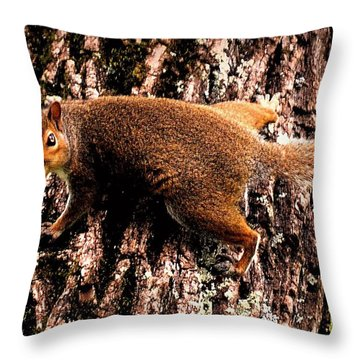 What Are You Looking At Throw Pillow by Tara Potts