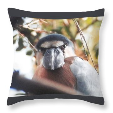 Throw Pillow featuring the photograph Funny Bird Face by Belinda Lee