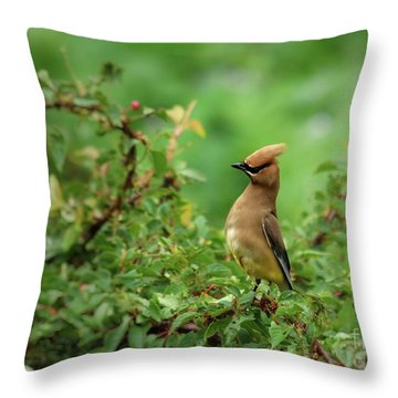 What? Throw Pillow by Kenny Glotfelty