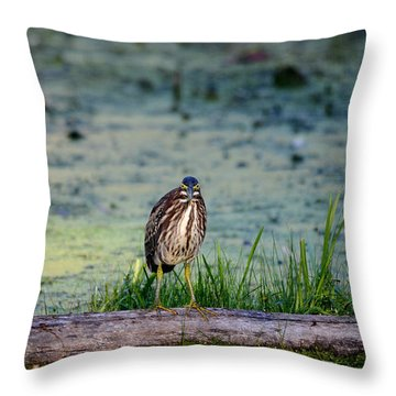 Throw Pillow featuring the photograph Whatcou Lookin' At? by David Porteus