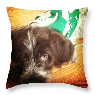 Wirehaired Pointing Griffon Puppy  Throw Pillow by Ashley Baker