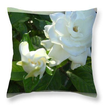 Whats So Special About White Flowers Throw Pillow by Ginny Schmidt