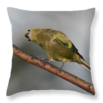 What's Up And Down Throw Pillow by Tony Beck