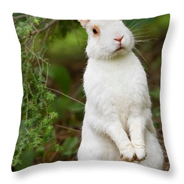 What's Up Doc Throw Pillow