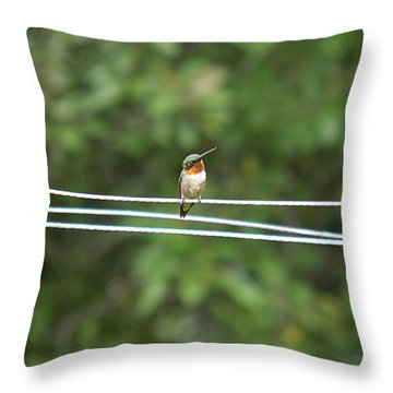 Whats You Talkin Bout  Throw Pillow by Nick Kirby