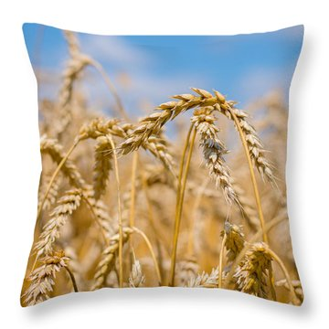 Wheat Throw Pillow by Cheryl Baxter