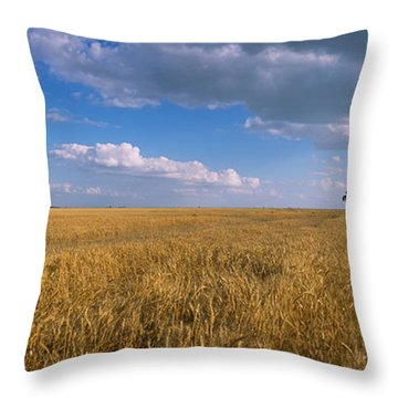 Wheat Crop In A Field, North Dakota, Usa Throw Pillow