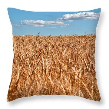 Wheat Field In Blue Sky Throw Pillow