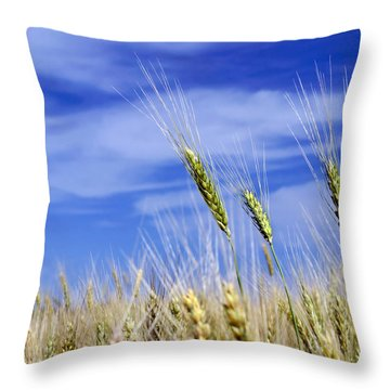 Throw Pillow featuring the photograph Wheat Trio by Keith Armstrong