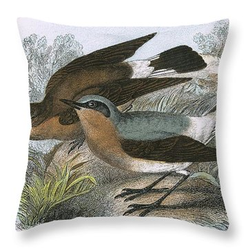 Wheatear Throw Pillow by English School