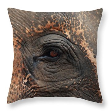 Throw Pillow featuring the photograph Where Am I Seeing by Ramabhadran Thirupattur