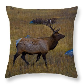 Where Are My Ladies Throw Pillow
