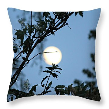 Throw Pillow featuring the photograph Where Are The Fairies by Jeanette C Landstrom