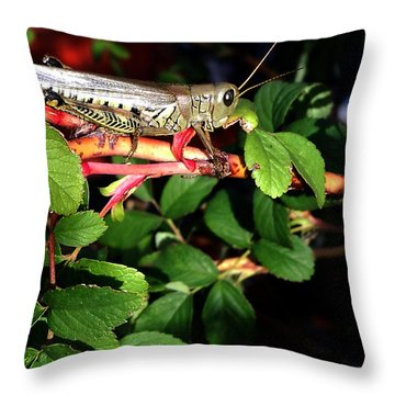 Grasshopper - Close Up Throw Pillow