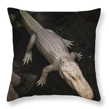 White Alligator Throw Pillow by Garry Gay