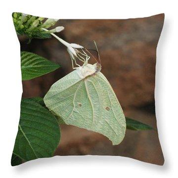 White Angled Sulphur #2 Throw Pillow