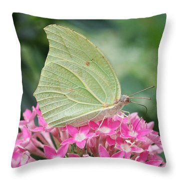 Throw Pillow featuring the photograph White Angled Sulphur by Judy Whitton