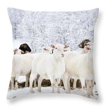 White As Snow Throw Pillow by Thomas R Fletcher