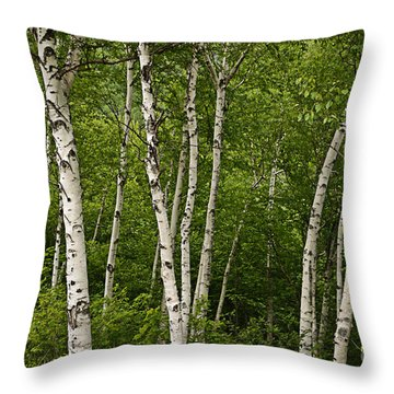 White Birch Throw Pillow