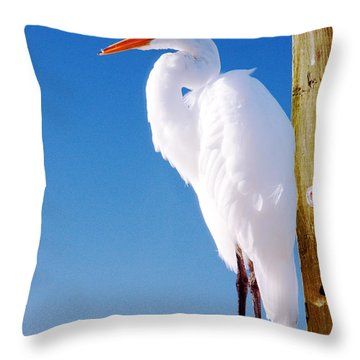 Great White Heron Throw Pillow by Vizual Studio