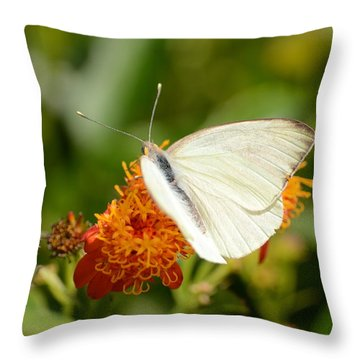 White Butterfly On Mexican Flame Throw Pillow by Debra Martz