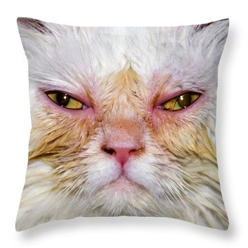 Scary White Cat Throw Pillow