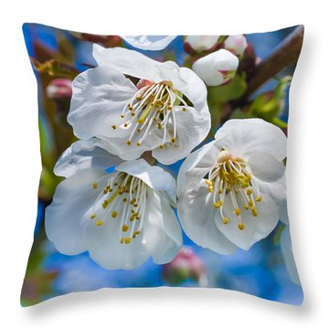 White Cherry Blossoms Blooming In The Springtime Throw Pillow