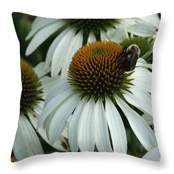 Throw Pillow featuring the photograph White Coneflowers  by James C Thomas