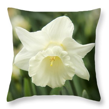 White Daffodil Flower Throw Pillow by Jennie Marie Schell