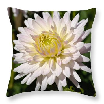White Dahlia Flower Throw Pillow