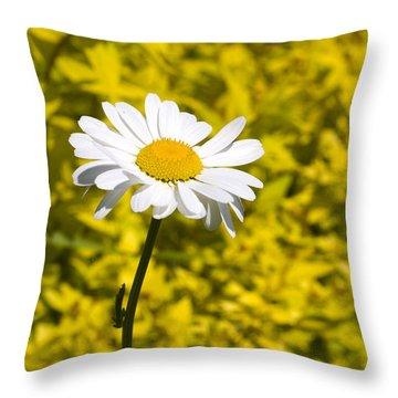 White Daisy In Yellow Garden Throw Pillow
