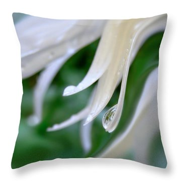 White Daisy Petals Raindrops Throw Pillow by Jennie Marie Schell