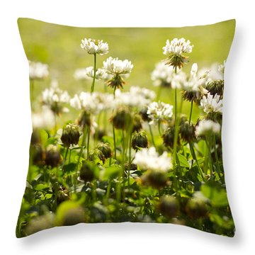 White Dutch Clover Wild Plants In The Sunshine Throw Pillow
