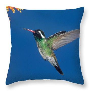White-eared Hummingbird Throw Pillow by Anthony Mercieca