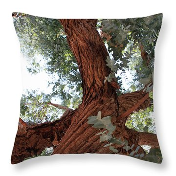 White Eucalyptus Tree Throw Pillow