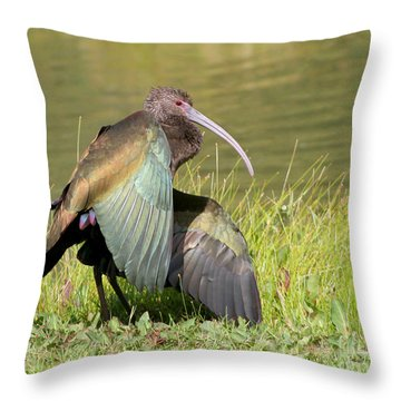 Throw Pillow featuring the photograph White-faced Ibis 1 by Bob and Jan Shriner