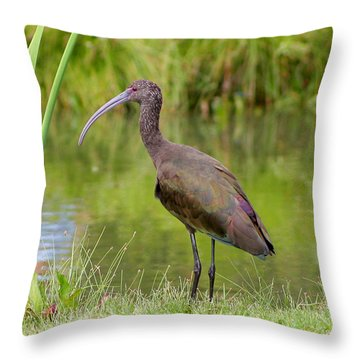 Throw Pillow featuring the photograph White-faced Ibis 2 by Bob and Jan Shriner