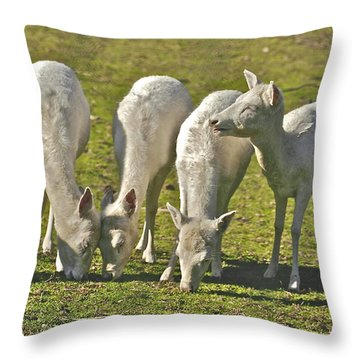 White Fallow Deer Mt Madonna County Park Throw Pillow