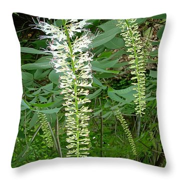 White Fern Throw Pillow by Aimee L Maher Photography and Art Visit ALMGallerydotcom