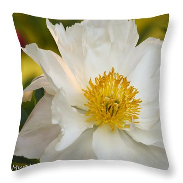 White Floribunda Rose Throw Pillow