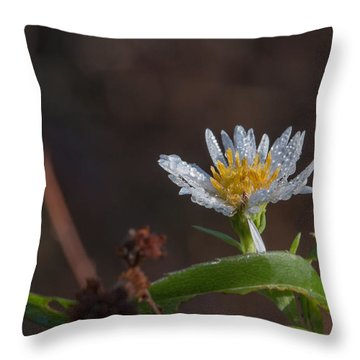 Throw Pillow featuring the photograph White Flower Dew-drops Autumn by Jivko Nakev