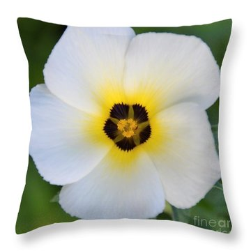 Throw Pillow featuring the photograph White Flower- Spotlight by Darla Wood