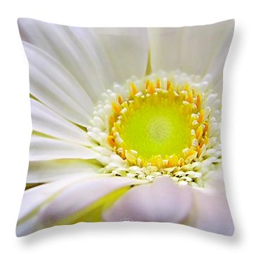 White Gerber Daisy Macro Throw Pillow by Danielle  Parent
