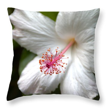 White Hibiscus Throw Pillow by Brian Harig