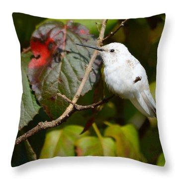 White Hummingbird Throw Pillow