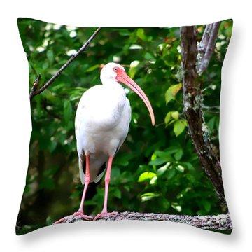 White Ibis Throw Pillow by Debra Forand