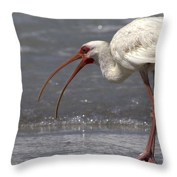 Throw Pillow featuring the photograph White Ibis On The Beach by Meg Rousher