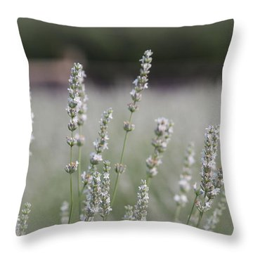 Throw Pillow featuring the photograph White Lavender by Lynn Sprowl